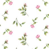 Small Watercolor Pink Rosebuds
