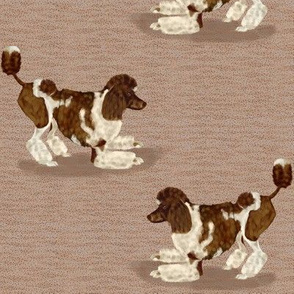 Brown Parti Poodle on textured background