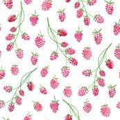 Rcollection_-_raspberries-10_shop_thumb