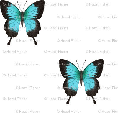 Ulysses Butterfly - simple repeat on white