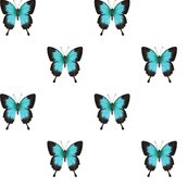 Ulysses_butterfly_simple_repeat_on_white_150_hazel_fisher_creations_shop_thumb