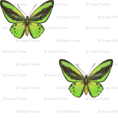 Cairns Birdwing Butterfly - simple repeat on white