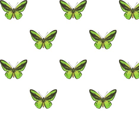 Rrrcairns_birdwing_butterfly_simple_repeat_on_white_150_hazel_fisher_creations_shop_preview