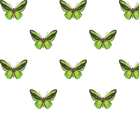 Cairns Birdwing Butterfly - simple repeat on white fabric by hazelfishercreations on Spoonflower - custom fabric