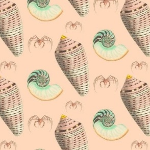 seashells_original-01