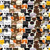 Kitten_Squad_Goals
