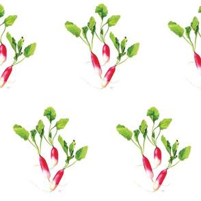 Jumbo Radishes, Garden Veggies, Pink and Green, Kitchen Print