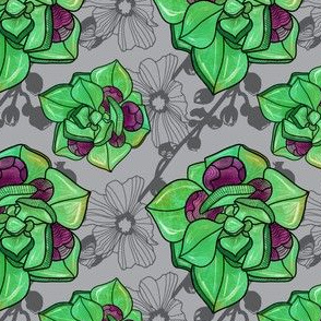 succulent_gray