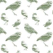 Burrowing Owls Dots- kale