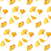 Fall Golden Gingkos on white