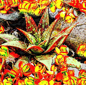 Sunny Succulents