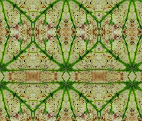 IMG_20170618_112225660 fabric by debra_ann on Spoonflower - custom fabric