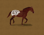 Appaloosa_horse_for_pillow_rev_thumb