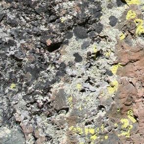 Lichen Boulder