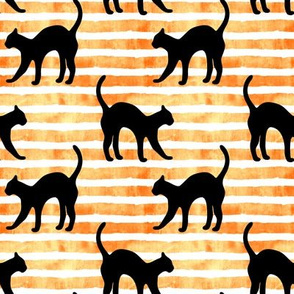 black cat on orange stripe