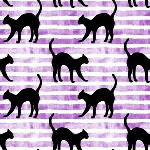 black cat on purple stripes