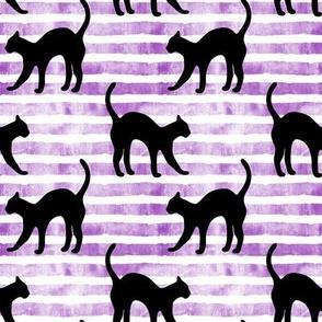 black cat on purple stripes