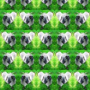 annoyed goat 2