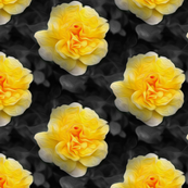 yellow rose - painted