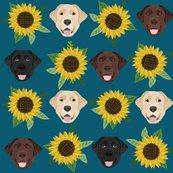 Rlabrador_sunflowers_2_shop_thumb