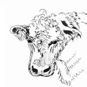 Bull Stare Pillow