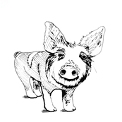Piglet Stare