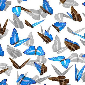 butterfly in blue and gray