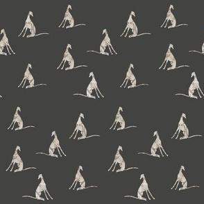 greyhounds, dark grey