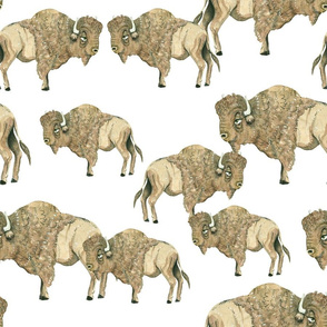 Buffalo Herd 3