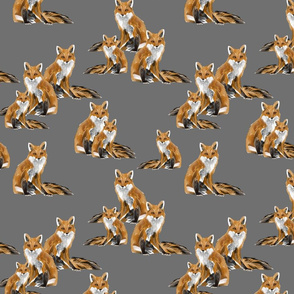 Friendly Foxes on Dark Grey
