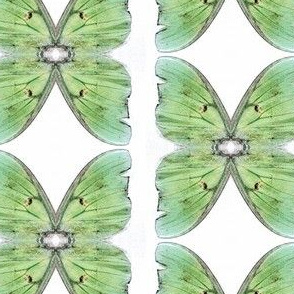 Green Butterfly sewindigo