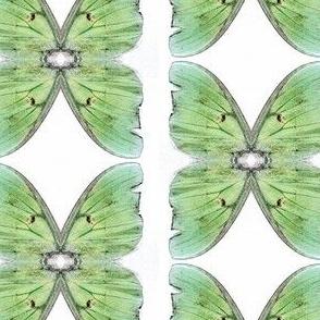 Green Butterfly sewindigo