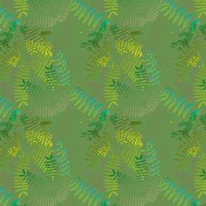 Mimosoideae01