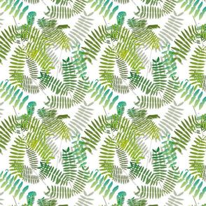 Mimosoideae02