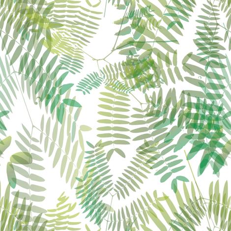 Mimosoideae05 fabric by schymik on Spoonflower - custom fabric