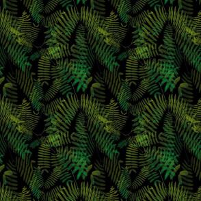 Mimosoideae05_black