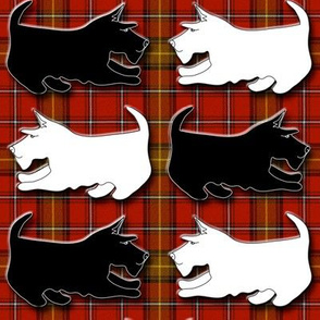 Black and Wheaten Playful Scottish Terriers on Red Plaid