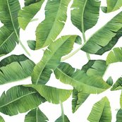 Rrrrrrrrrrrrbanana_leaves_shop_thumb