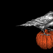 Crow  on pumpkin appliqué