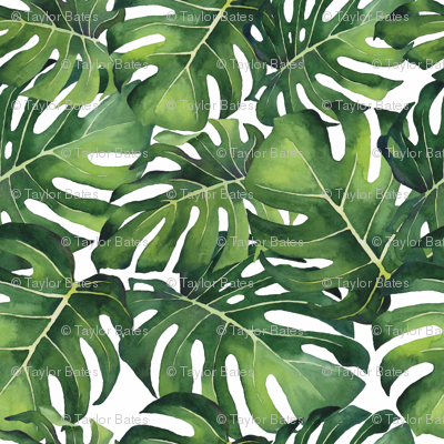 Watercolor Monstera Leaves