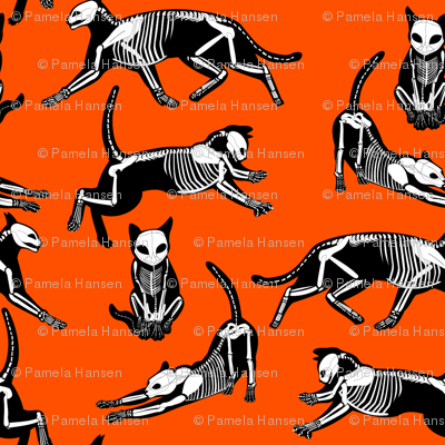 haunted cat skeletons orange and black
