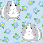 guinea-pigs-and-forget-me-nots on blue