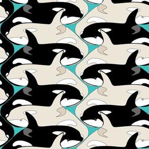 Killer Whale Orca Pod with Albinos