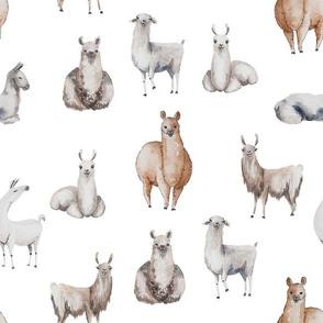 Bohemian Llamas // White