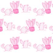 Cacti and aloe