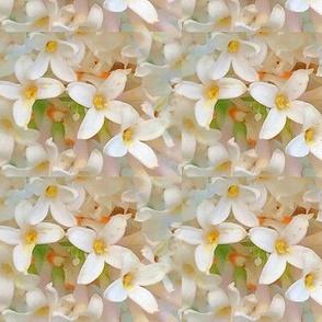 lillacs white