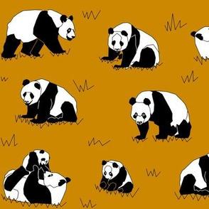 Mustard Pandas