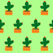 Cactus on light green