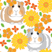 guinea-pigs-with-yellow gerber daisies