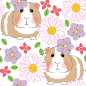 guinea-pigs-with-white-gerber-daisies